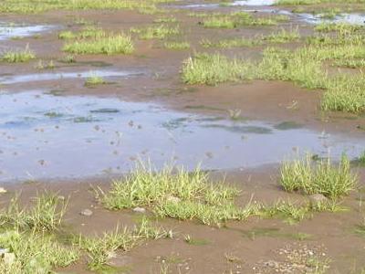 Tidal Marsh Of Mandø
