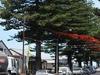 Main Street Of Beachport