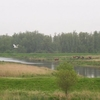Biesbosch Wetlands