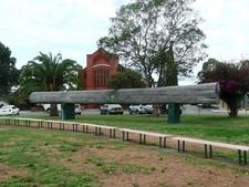 Big Log At Central Park Wingham