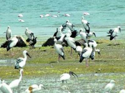 Birds At  Jayakwadi