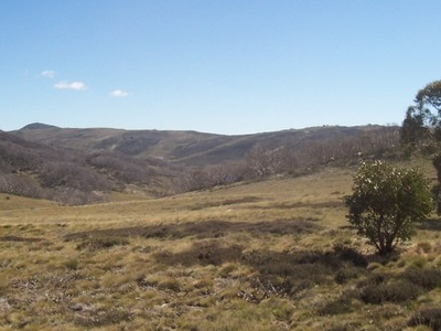 Bogong High Plains In Summer