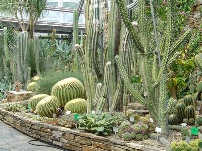 Botanical  Garden  Berlin     Cacti  House