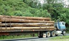 Tropical Hardwoods Traveling Through Braulio Carrillo National P