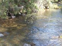 Buckland Río