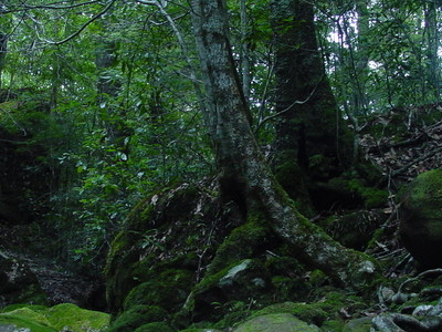Budawangs Subtropical Forest