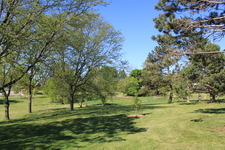 Buhr Park Wooded Area