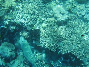 Bunaken Diving Site