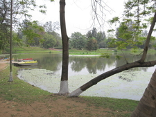 Lake With Boating Facilities In The Park