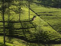 Tracking Sri Lanka Tour