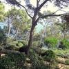 Calella De Palafrugell - Jardí De Cap Roig Gardens