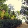 Calella De Palafrugell - Jardí De Cap Roig Landscape