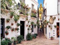 Flor Alley Alley