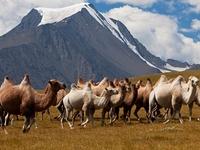 Altai Tavan Bogd National Park