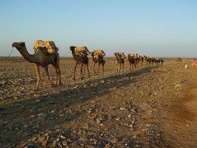 Camel Train @ Dallol - Danakil Depression ET