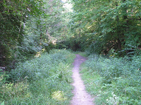 Campaign Trail 256