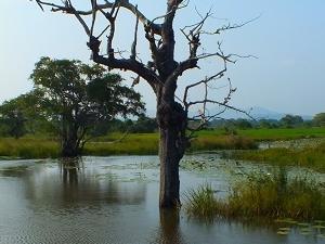 Camping And Safari with Nature Tour - Sri Lanka Fotos