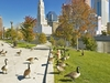Canadian Geese With Columbus Backdrop