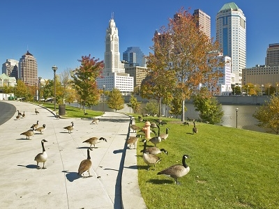 Canadian Geese With Columbus OH Skyline