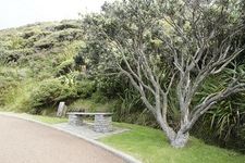 Cape Reinga Roadside - Northland