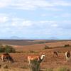 Cape Town Safari Package