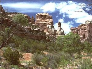 Capitol Reef Cedar Mesa Campsite