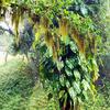 Caratuva Atlantic Forest