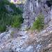 Carbon Glacier Trail