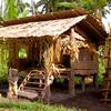 Carey Island - Mak Miri