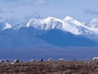 Fairbanks to the Arctic Ocean Overland 7 Days