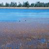 Carnero Lake