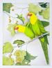 Carolina Parrots At Sequoia Gallery - Hillsboro OR