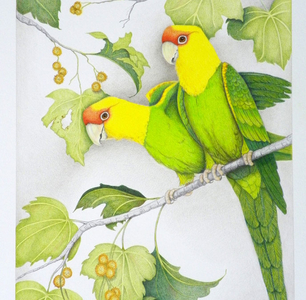Carolina Parrots At Sequoia Gallery - Hillsboro OR