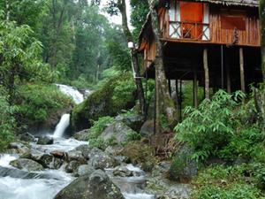 Resorts Blue Ginger
