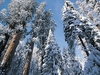 CA Sequoia NP