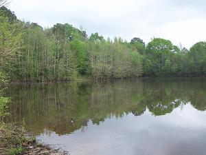 Castor Creek