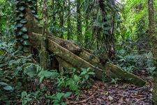 Catarata Del Toro Rainforest Jungle