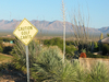 Caution Golf Carts
