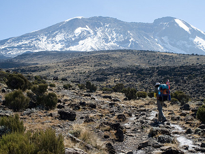 Kilimanjaro Climbs and Wildlife Safari in Tanzania Photos