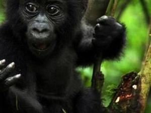 Explore The Pearl of Africa Safari Fotos