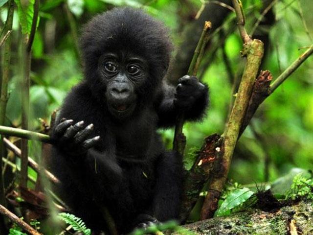 Explore The Pearl of Africa Safari Photos