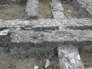 Celular Trichora romjai