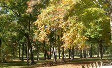 Central Park Trees Ashland K Y Oct 2 0 0 6