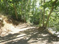 Central Te Hoe Hut