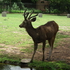 Cervidae Nehru Zoo Hyderabad