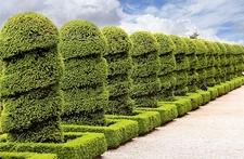 Chateau De Hautefort Topiary