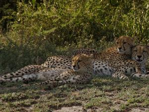 Tanzania Safari Tour Deals Photos