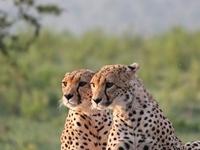 5 Days Masai Mara Classic Safari