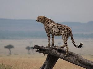 Budget Tented Camp Safari Masai Mara