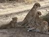Safari In Ngorongoro, Serengeti And Lake Manyara